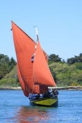 <h5>Une vaquelotte dans le Golfe du Morbihan</h5>